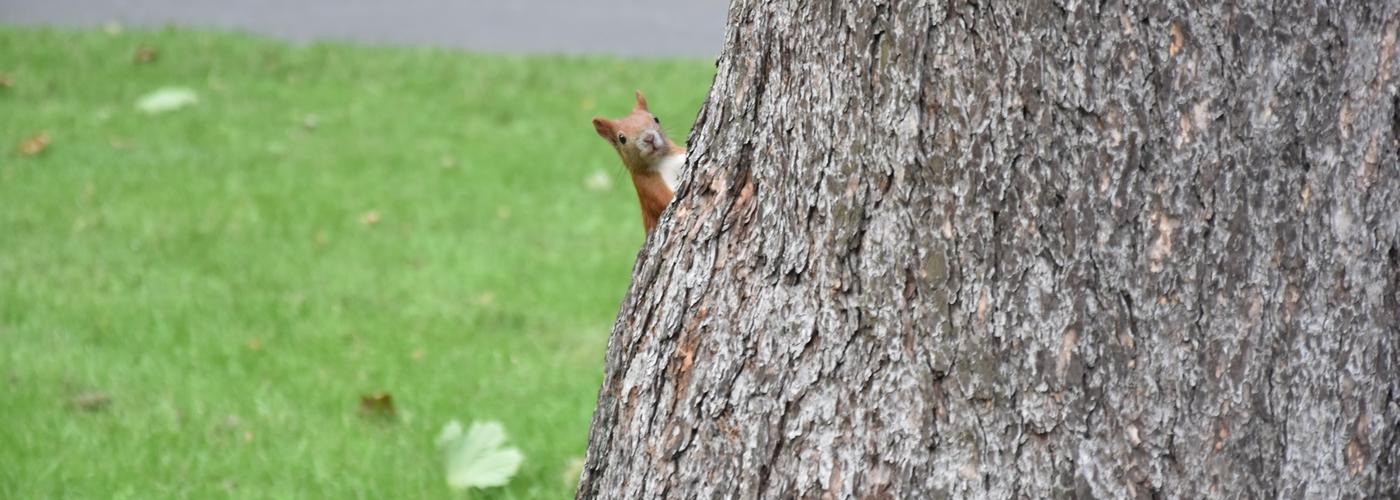 Foto KOSTKA – Wiewiórka – zdjęcia uczniów