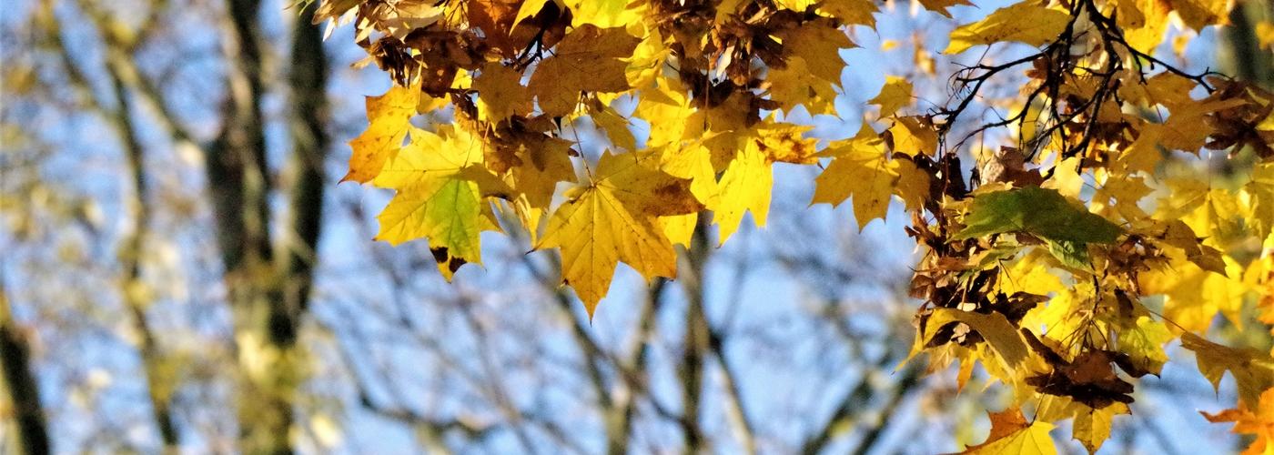 Foto Kostka – jesień